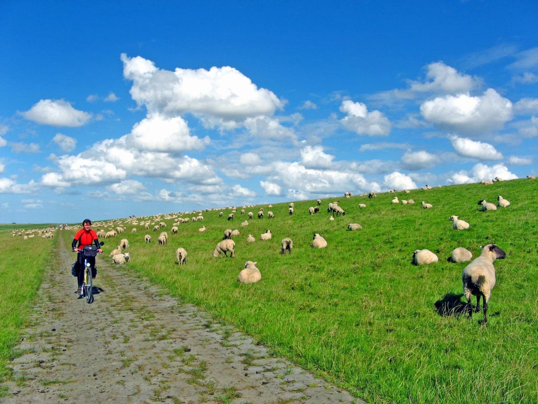 Radreise Nordseeküste